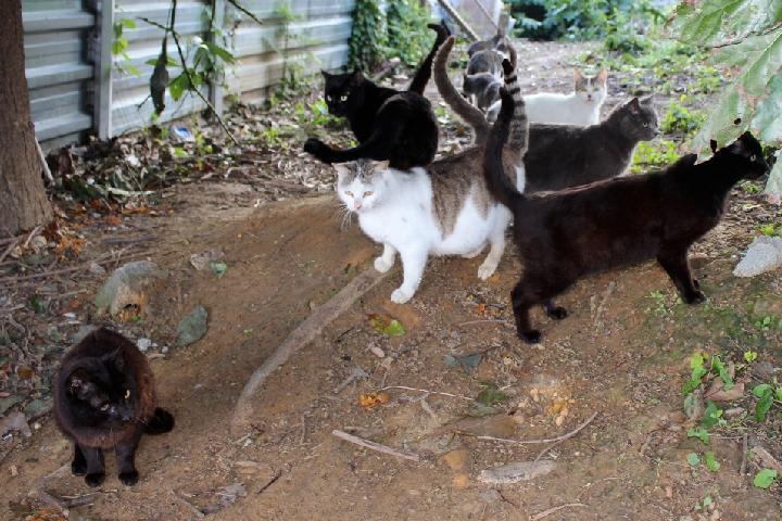 Esterilización para gatos de la calle