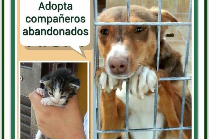 Adopta Compañeros Abandonados