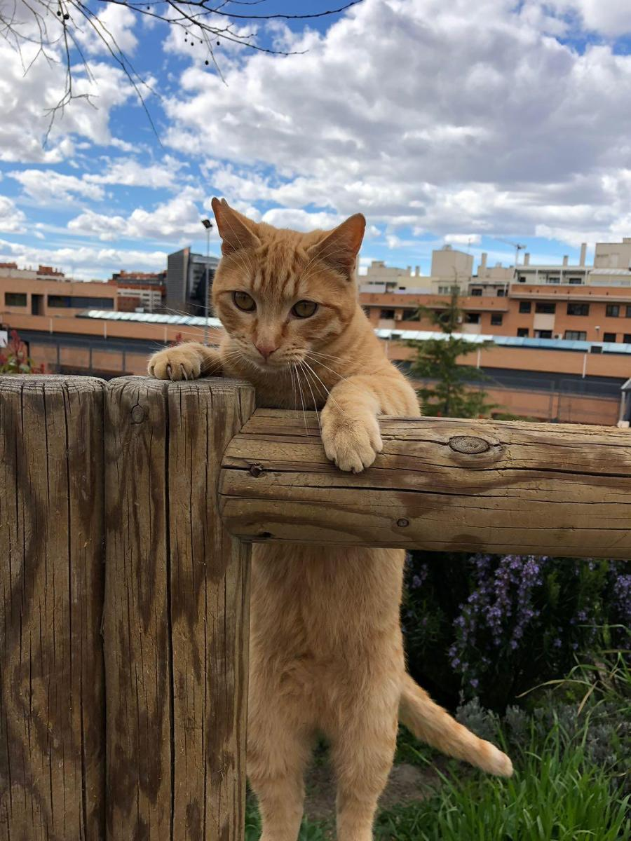 Locas por los gatos