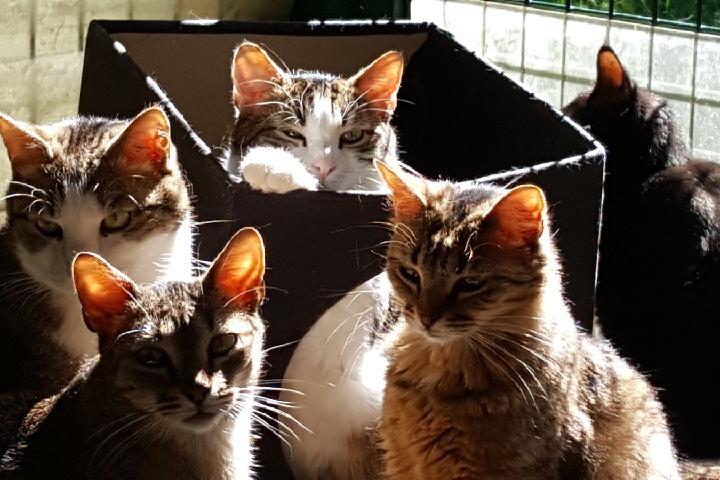 Aidez-nous à sauver les chats abandonnés et maltraités