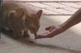 Asociación Protectora Felina de Cáceres