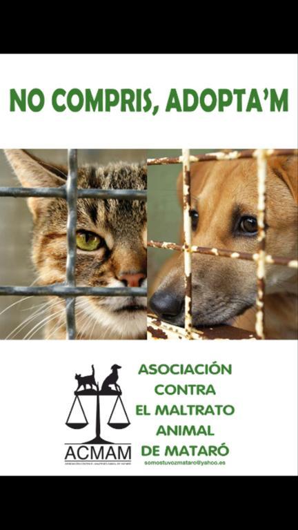 Asociación contra el maltrato animal d Mataró