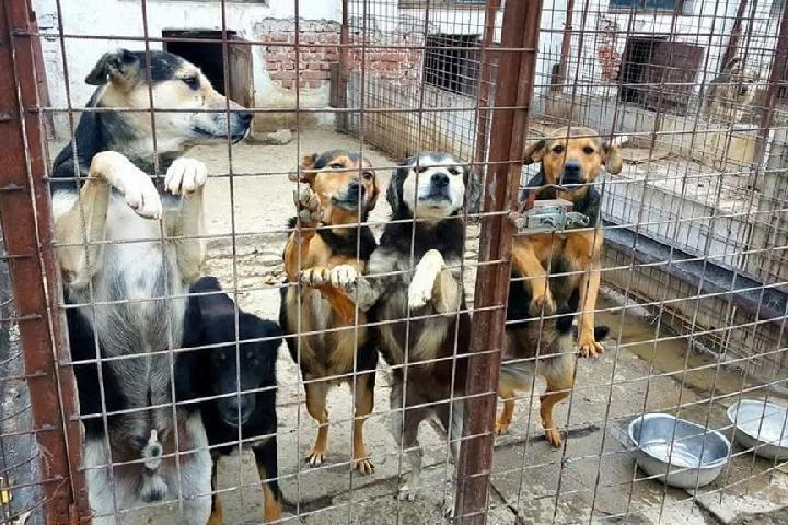 Hilfe für die 500 Hunde im rumänischen Tierheim Vaduva