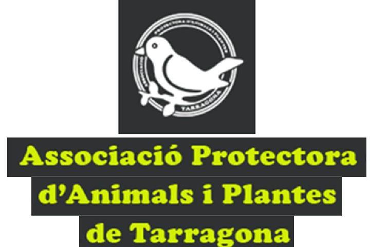 Teaming de la Protectora de Tarragona