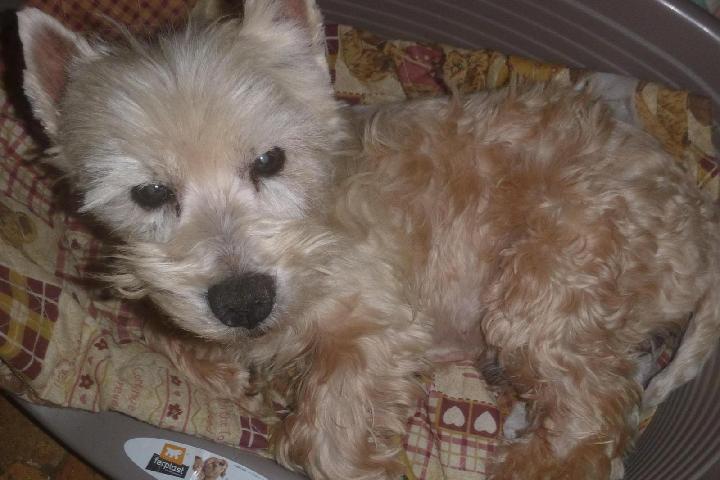 Adoption chiens âgés Jenaya
