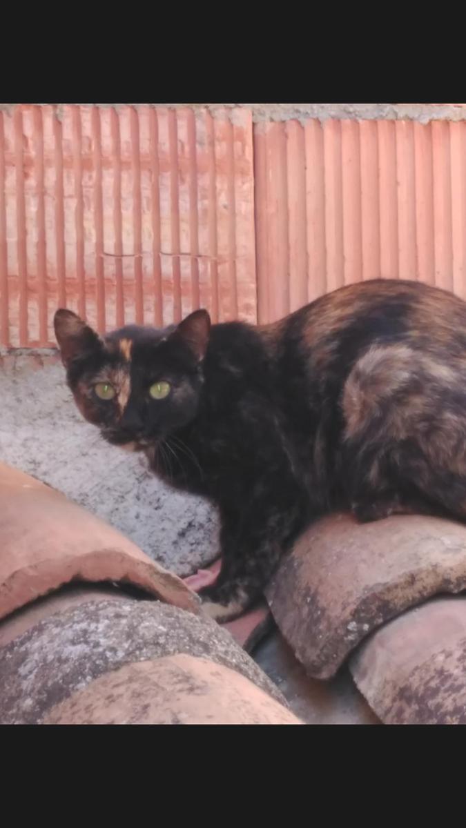 Control de colonias felinas=Proyecto CER+gastos veterinario y mantenimiento