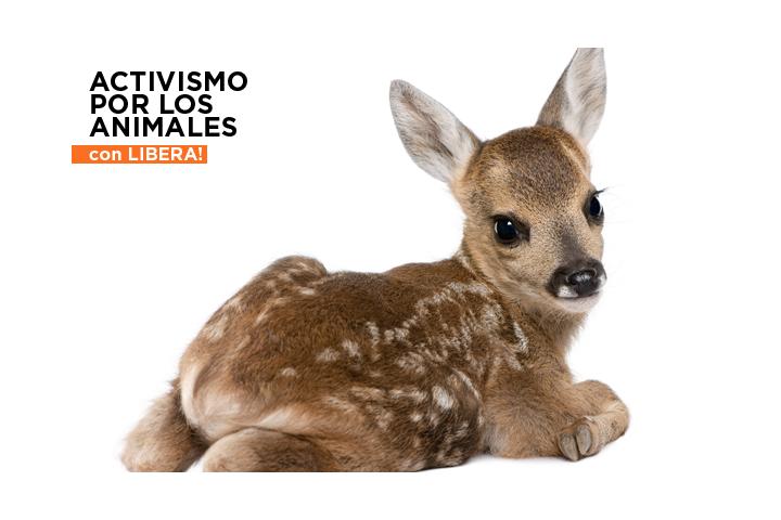¡Activismo por los Animales!
