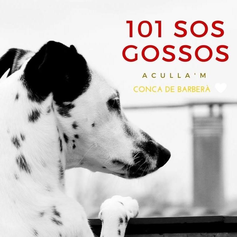 ASSOCIACIÓ 101 SOS GOSSOS
