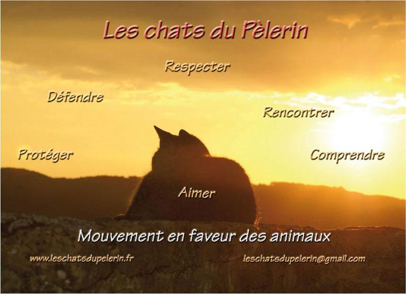 Les Chats du Pèlerin