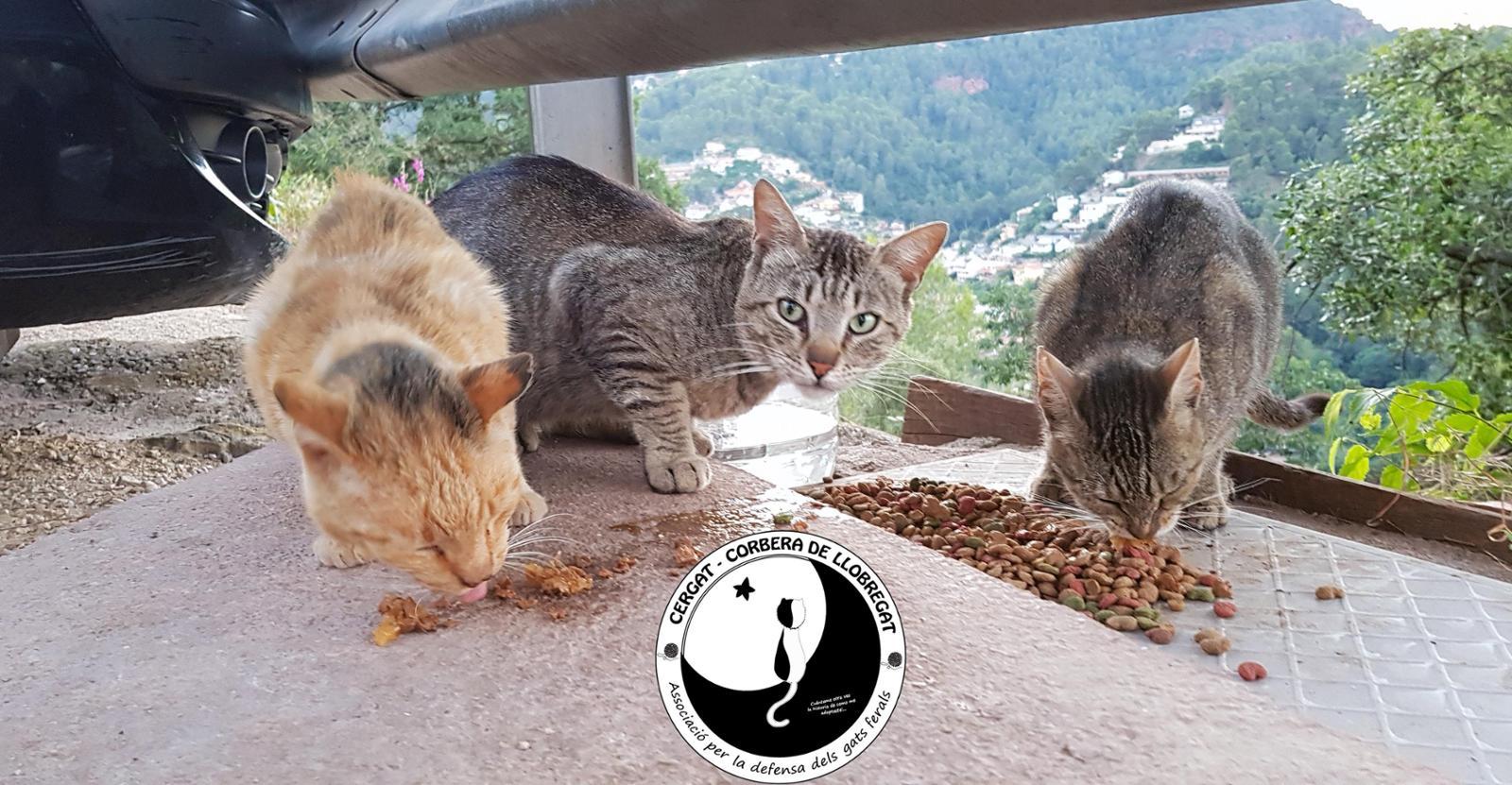 Asociación Animalista CERGAT. En defensa dels gats ferals.