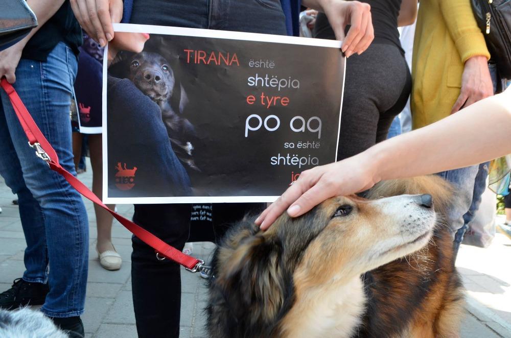 Animal Rescue Albania ARSA