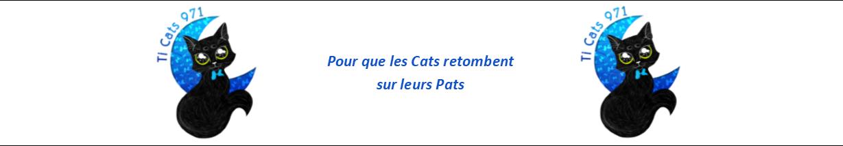 Ti Cats 971