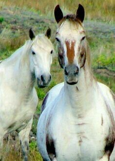 Help for Horses