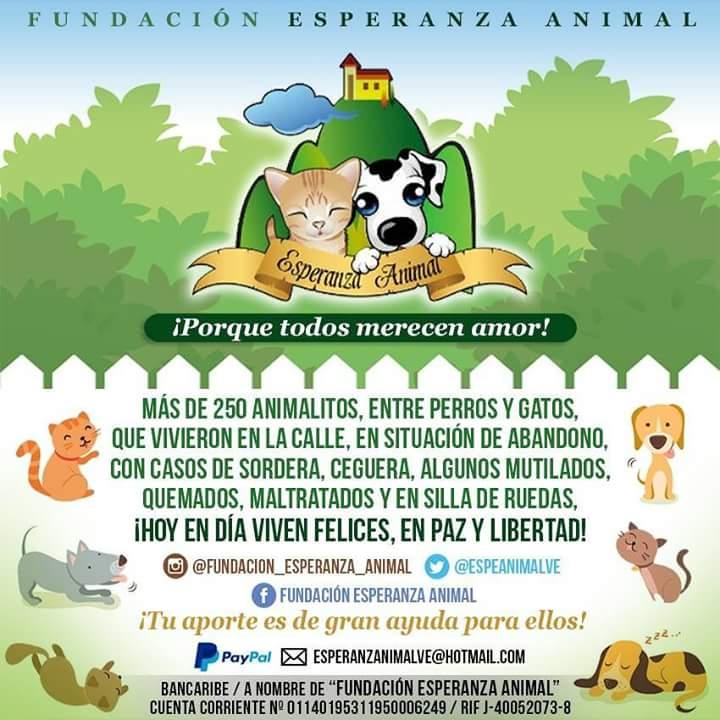 Animales Abandonados en Venezuela