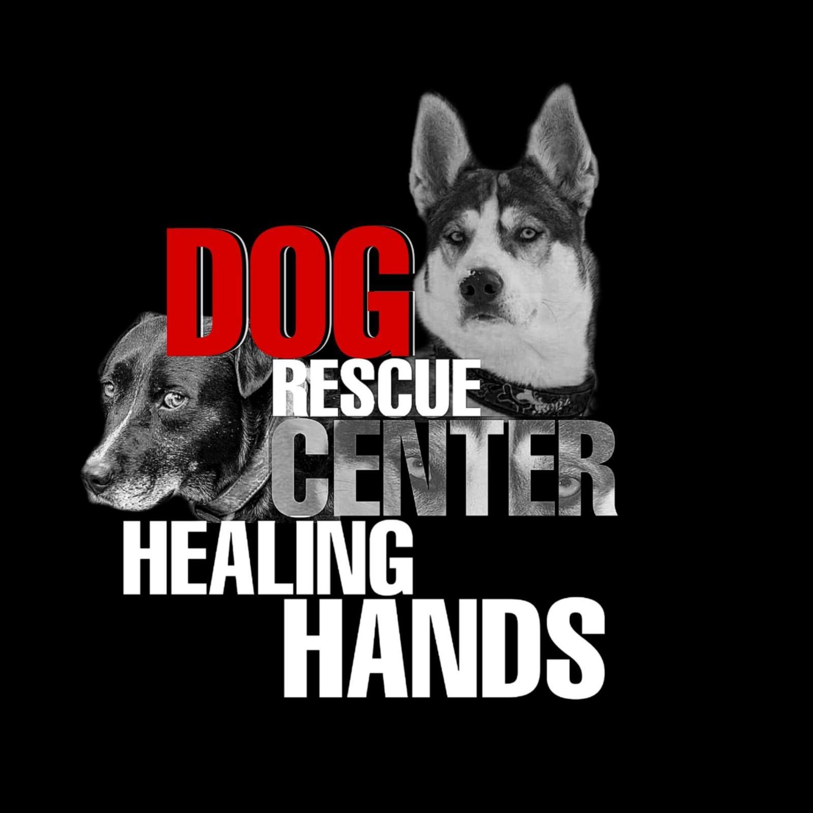 Dog Rescue Center Healing Hands Ungarn