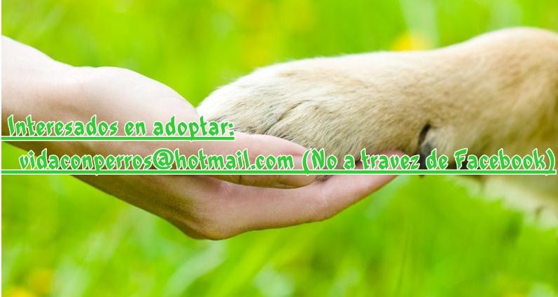 Control de la natalidad en perros y gatos