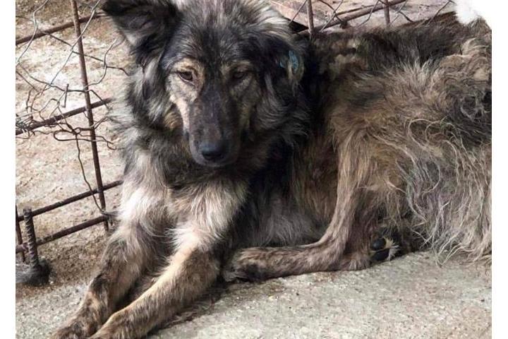 Ein Leben für Hunde aus dem Alexandria Killing Shelter
