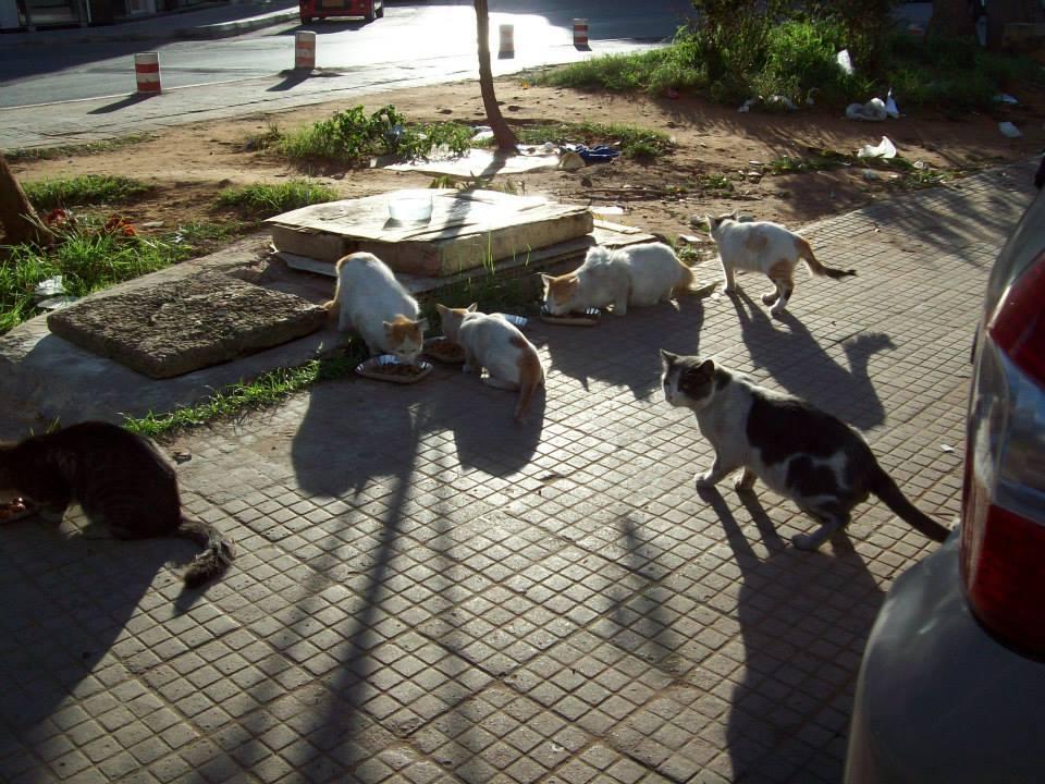 Aider Hajar et les chats errants de Rabat