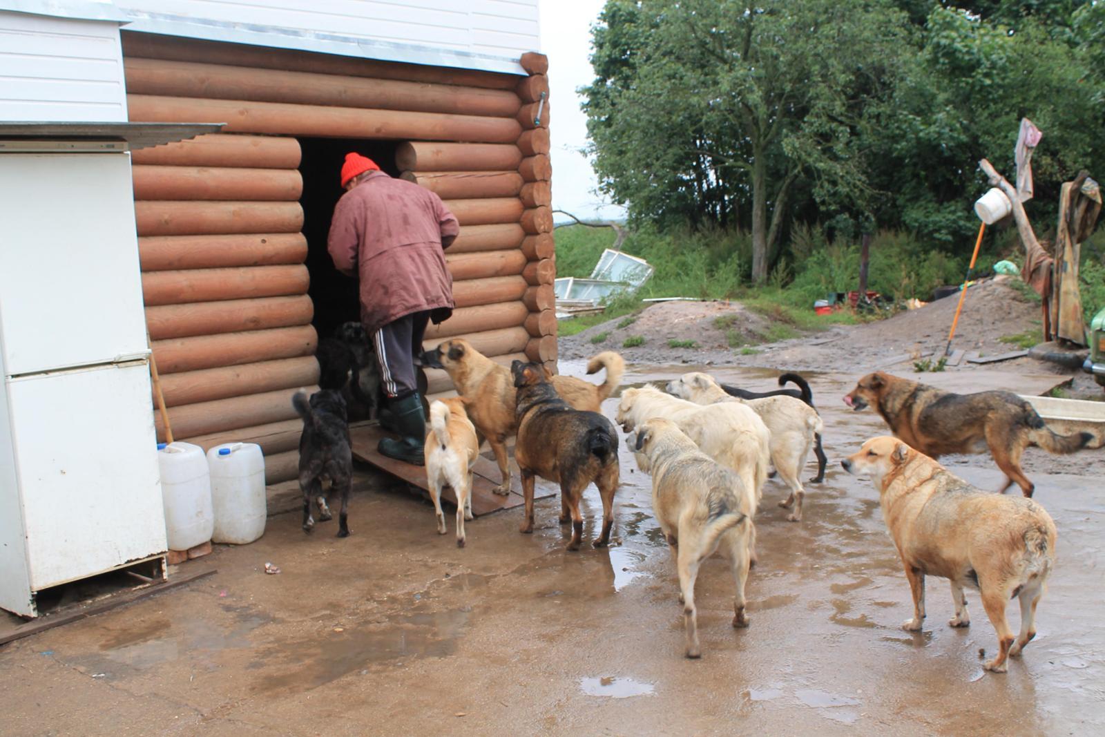 Hilfe für Viktors Hunde