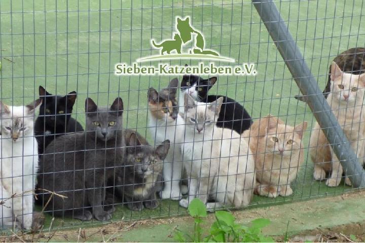 Sieben-Katzenleben e.V. - wir schenken Straßenkatzen ein neues Leben