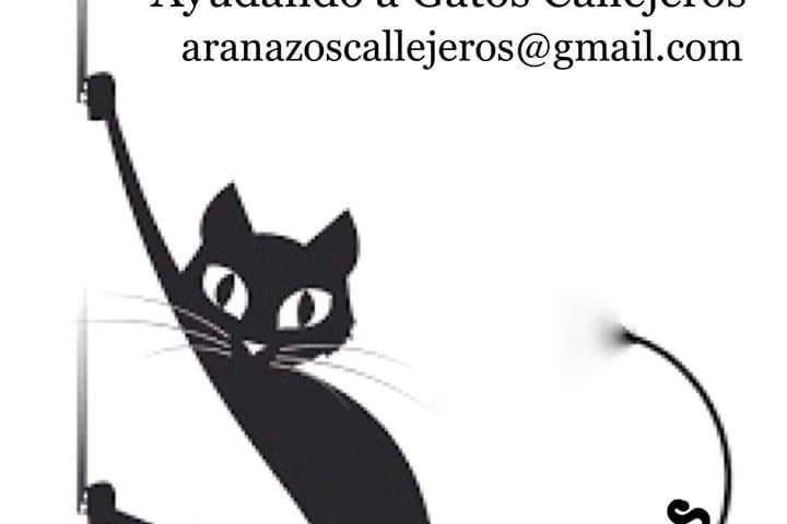 ARAÑAZOS: Ayudando a gatos callejeros