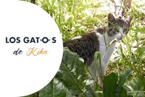 Los gatos de kika
