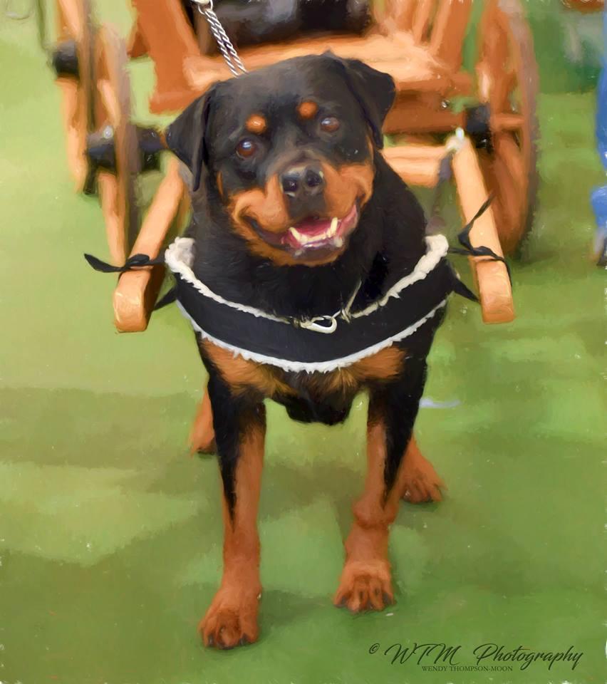 Pureaz Dog Rescue Spain