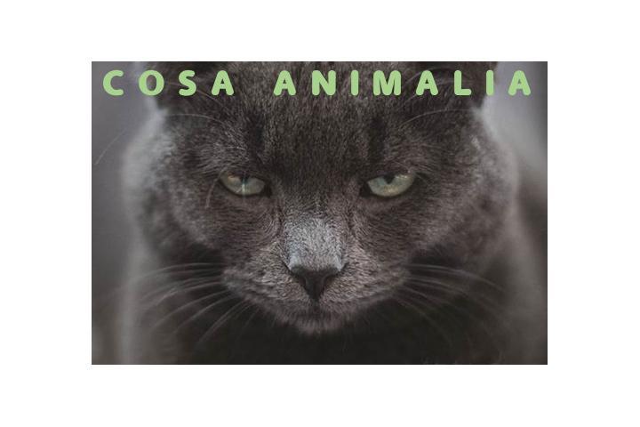 COSA ANIMALIA