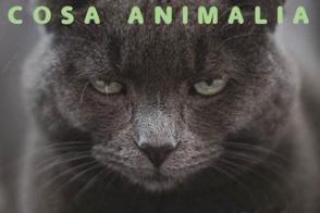 Chatons A L Adoption Cosa Animalia