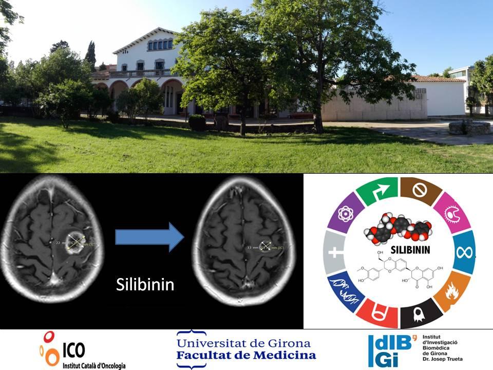 Investigación silibinina contra el cáncer