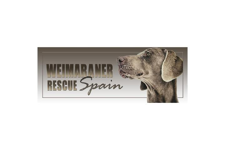 Weimaraner Rescue Spain