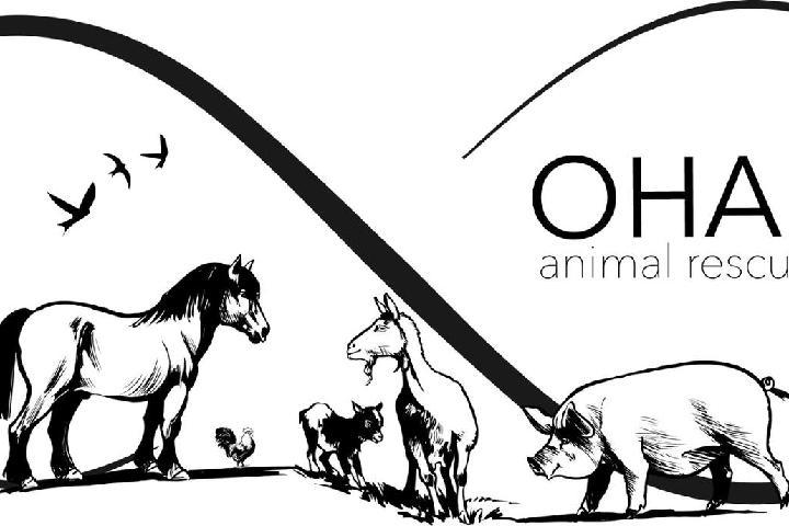 Rifugio Ohana animal rescue family
