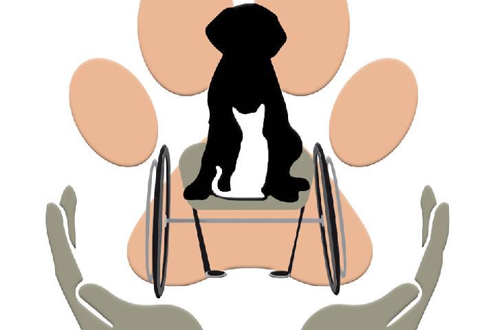 Pfotenhilfe Handicap- und Straßentiere e.V.