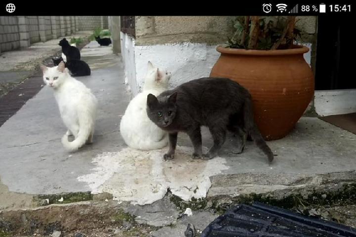 La bodega de los gatos