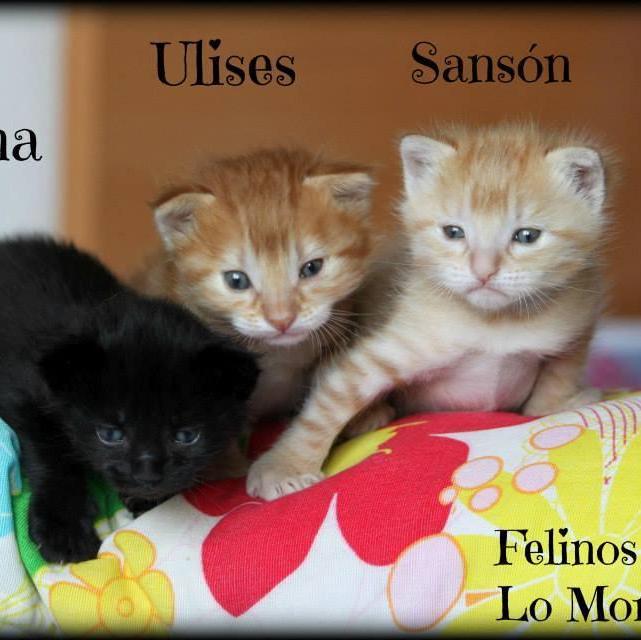 Felinos Lo Morant y AGA Alicante