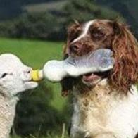 Ayuda alimentaria Animalista