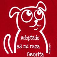 Protectora de Animales Principado de Asturias