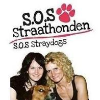 SoS straathonden Turkije