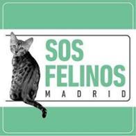 S.O.S Felinos Madrid