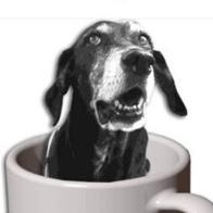 La Yayoteca-GosCafé. Santuari Animal. Adopcions gossos senior.