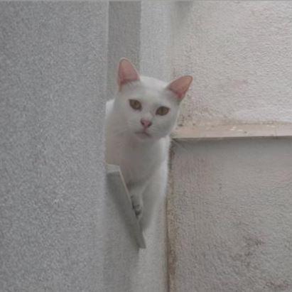 Coku Cat