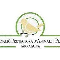 Protectora Tarragona