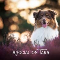 Asociación Tara
