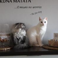 Odin & Minnie Felinos adoptados