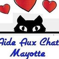 Assocation Aide Aux Chats Mayotte