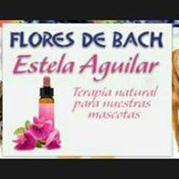Estela Aguilar Flores