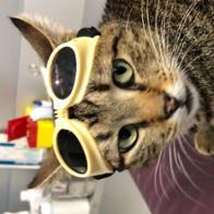 Proyecto Urban Cat