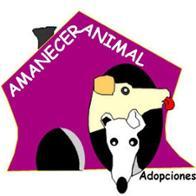 Susana-APA Amanecer Animal adopciones