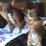 Javier (Apu,Chuli & Sasa) Herrero Mera