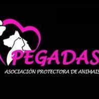 Asociación Protectora de animais Pegadas